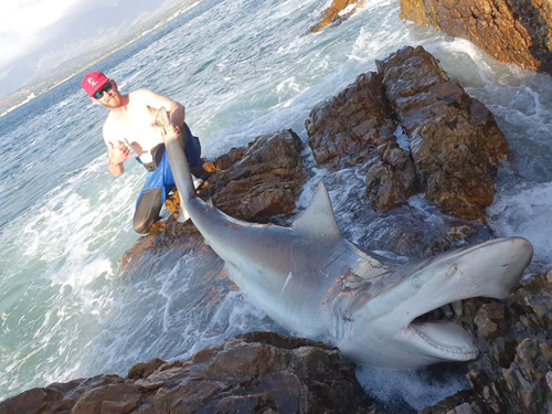 Ruan Brand with sharks he caught on T-Line